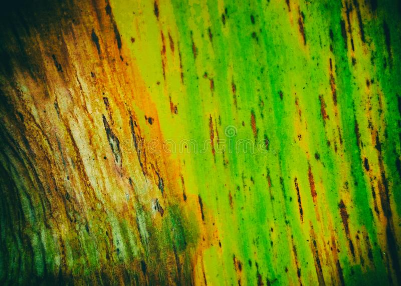 The abstract art design background of dried banana leaf ,show texture of banana leaf,dried skin from sunlight,grainy film style royalty free stock photography