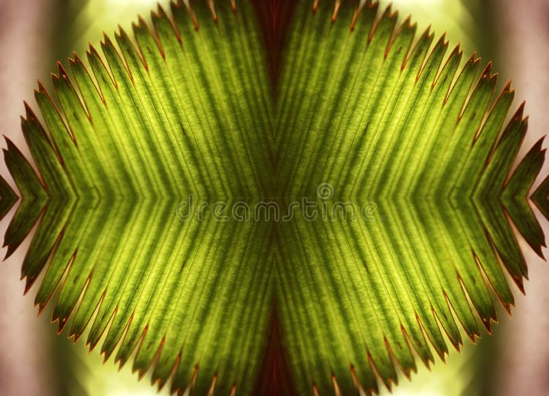 Abstract artsy background of green exotic leaves mirrored against each other. An abstract artsy background of green exotic leaves mirrored against each other stock illustration