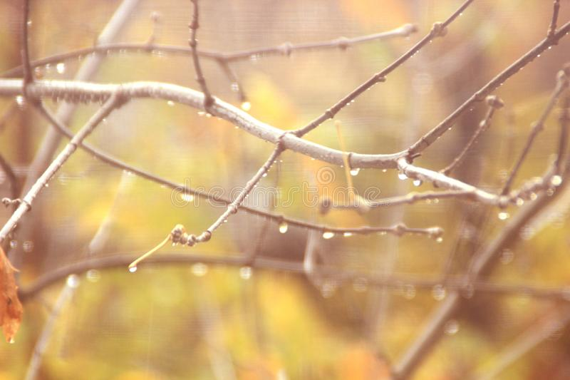 Abstract autumn background with blurred sprigs of trees and water droplets in soft orange and yellow royalty free stock image