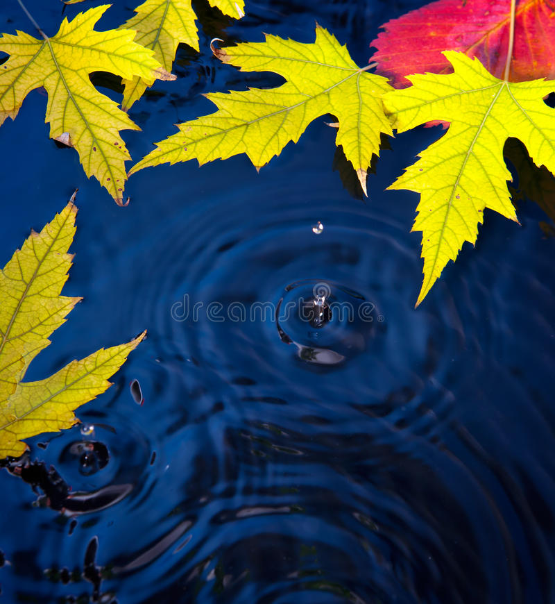 Download Abstract Autumn Background With Leaves Stock Image - Image: 21215677