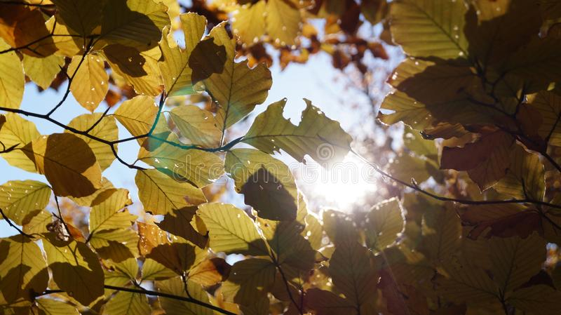 Abstract autumn background with leaves and sun light. royalty free stock image