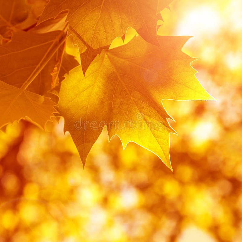 Abstract autumn background stock photography
