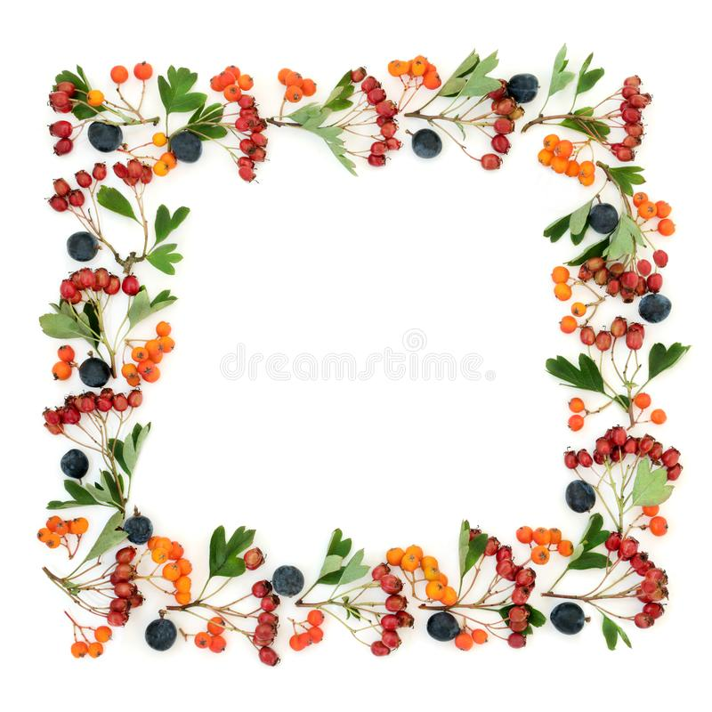 Abstract Autumn Berry Border royalty-vrije stock afbeelding