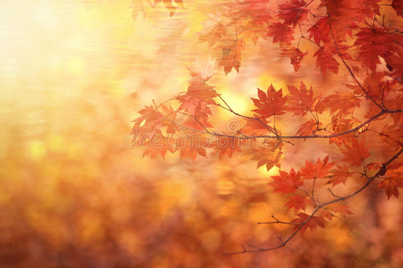 Abstract autumn forest. Blur background royalty free stock images