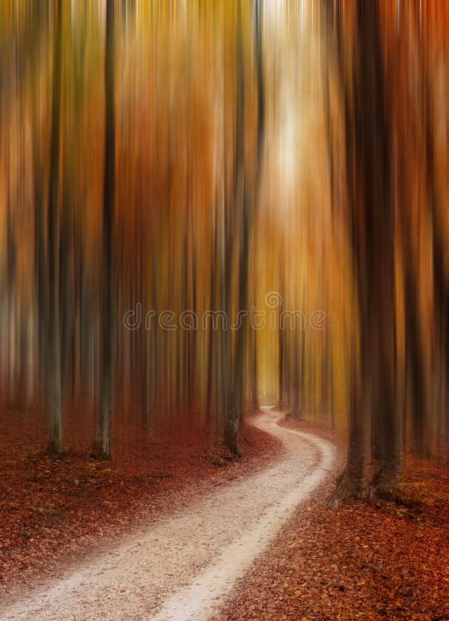 Abstract autumn forest magic background. Red and orange abstract autumn forest fantastic environment royalty free stock photography
