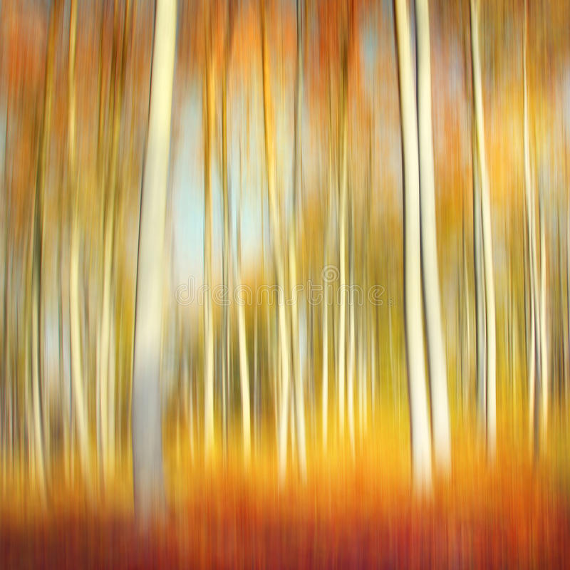 Abstract autumn forest. Abstract motion blur of trees in a forest with autumn colors royalty free stock photos