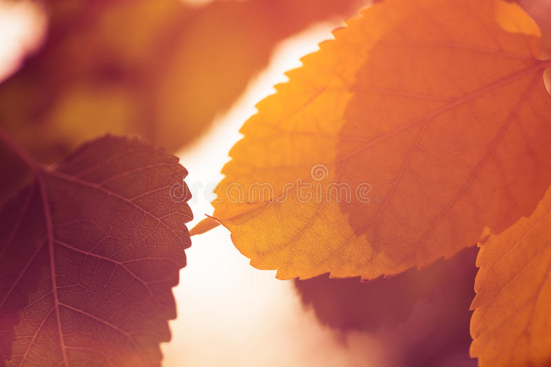 Abstract autumn leaves background stock photography