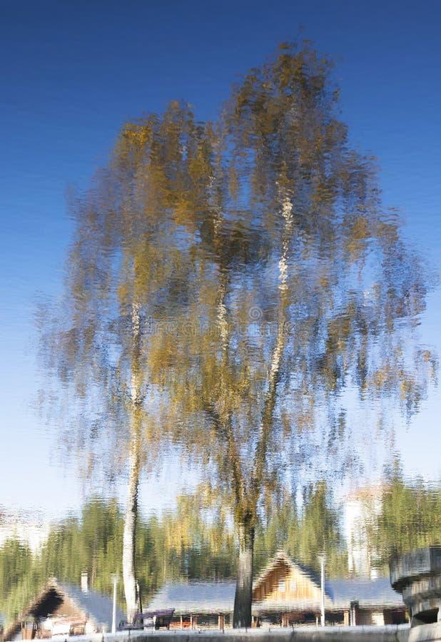 Abstract autumn tree reflection stock image