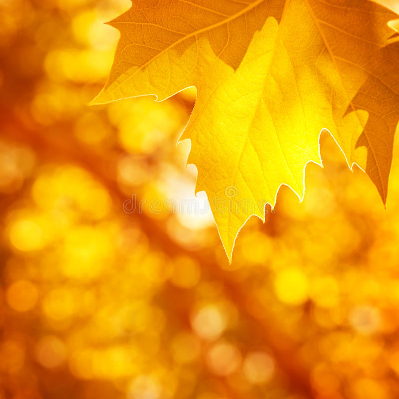 Free Abstract Autumnal Background Royalty Free Stock Photo - 33445365