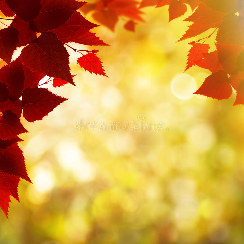 Free Abstract Autumnal Backgrounds Royalty Free Stock Photo - 44344955