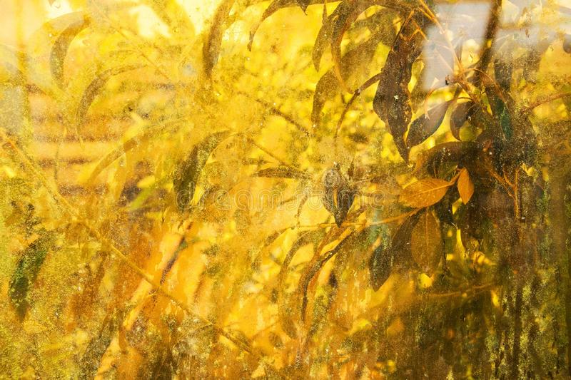 Abstract autumnal horizotal background. dirty window and green p stock photos