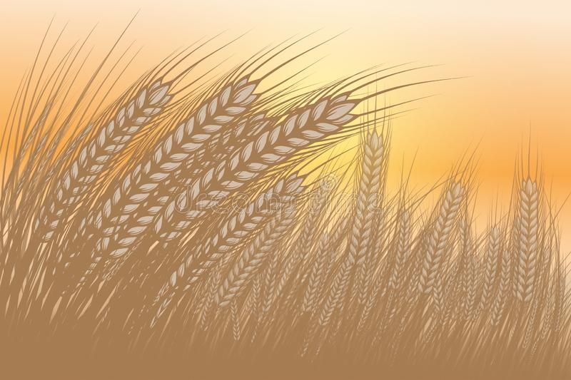 Barley is a vector abstract background. vector illustration
