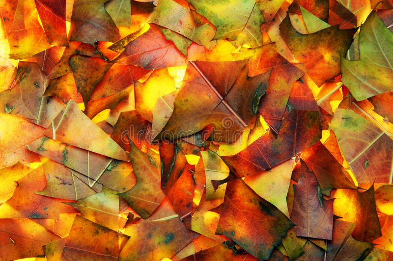 Abstract background from autumn leaves stock photos