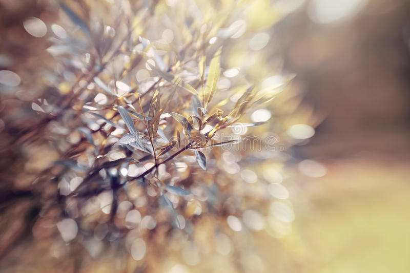 Abstract background with bokeh with branches of willow. royalty free stock photos