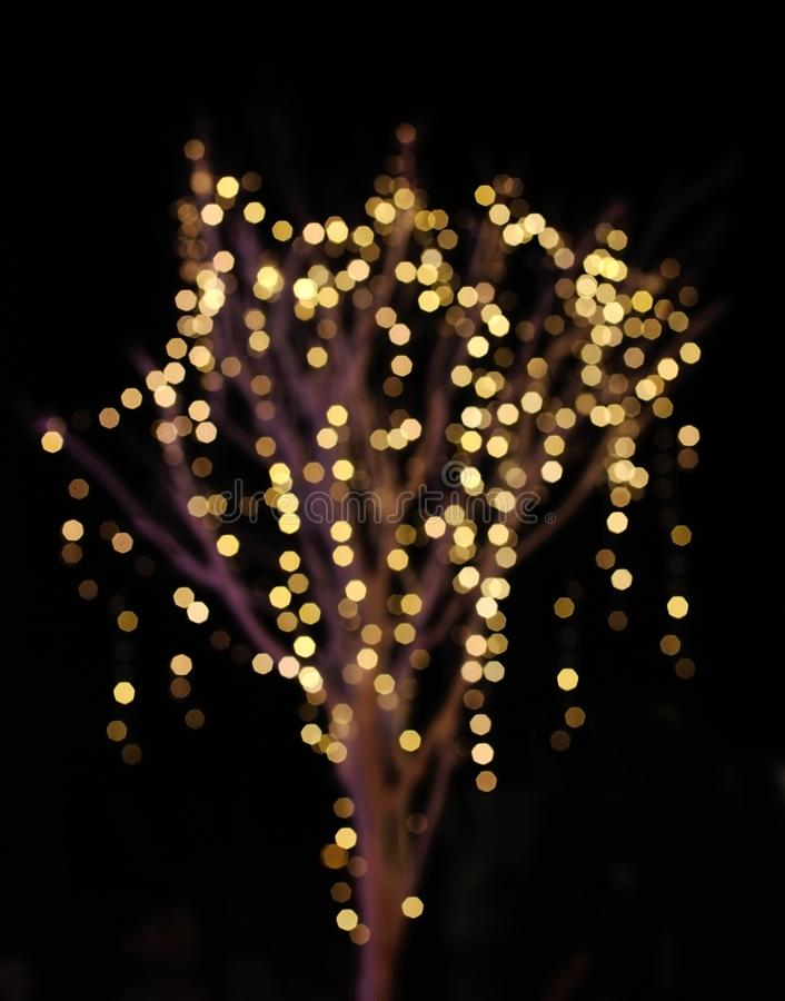 Abstract background bokeh on tree. On christmas day stock photos