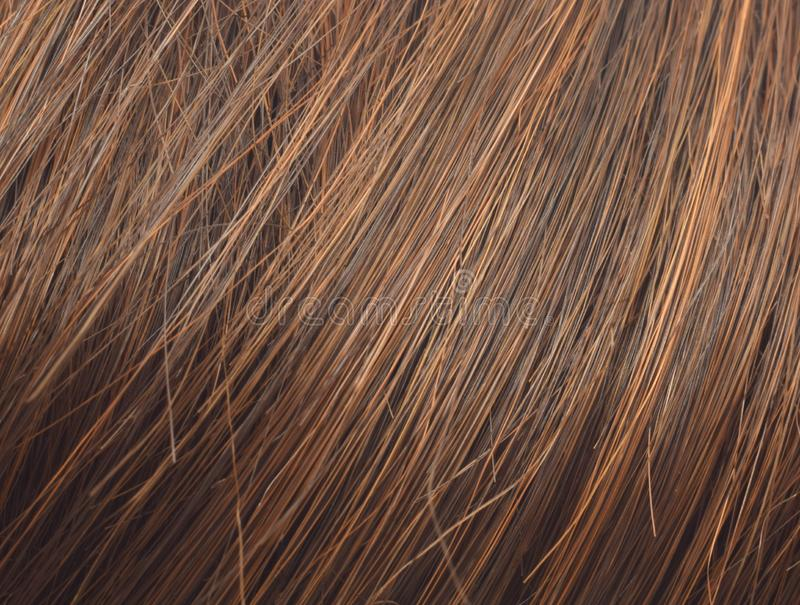 Abstract background brown women hair. Long brown women hair closed up as beauty background stock image