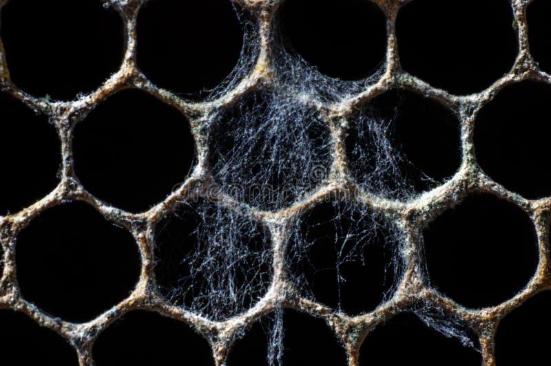 Cobweb on object, honeycombs royalty free stock photos