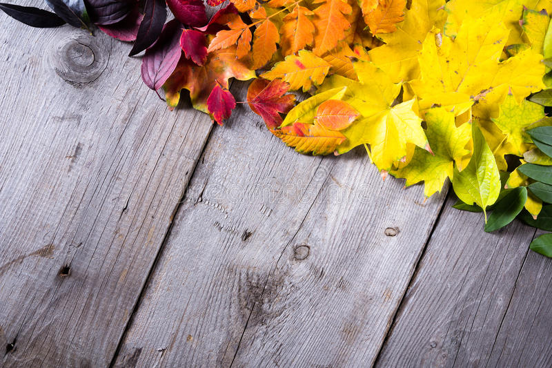 Abstract background of colourful autumn leaves stock images