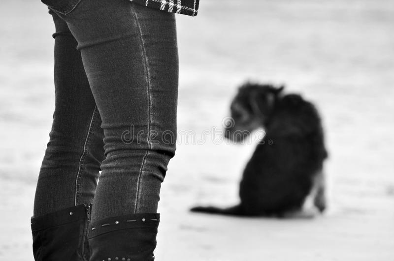 Abstract background concept grief loss death of pet dog stock photography