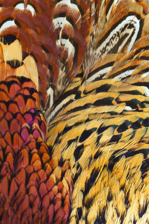 Free Abstract Background Consisting Of Rigneck Pheasant Royalty Free Stock Photos - 13209128