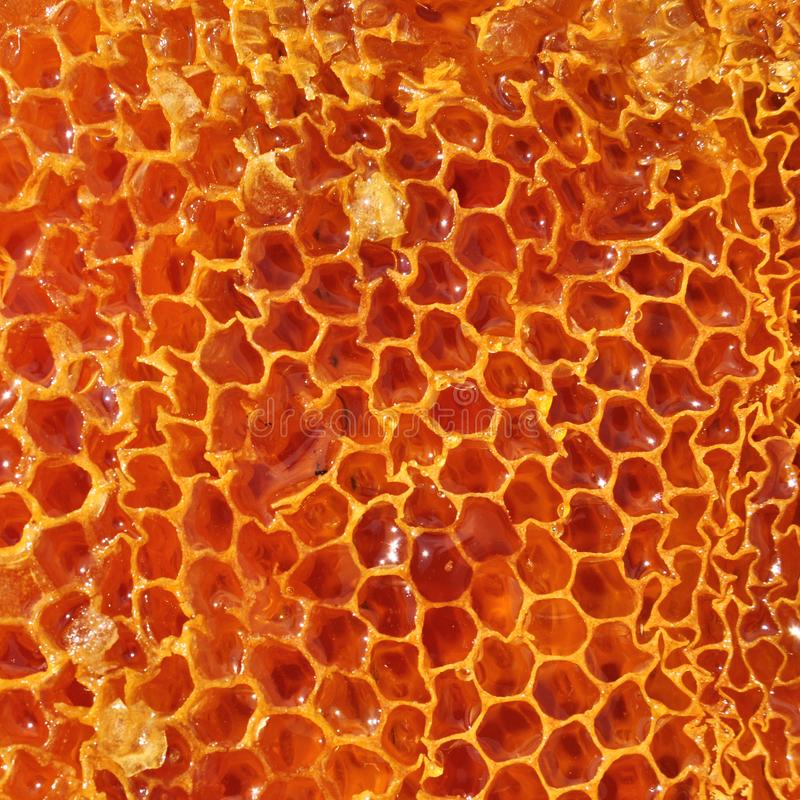 Honeycomb built by bees stock photos