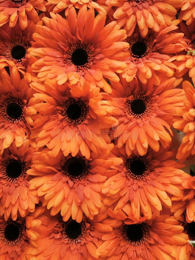 Abstract background floral orange and red colored royalty free stock photo