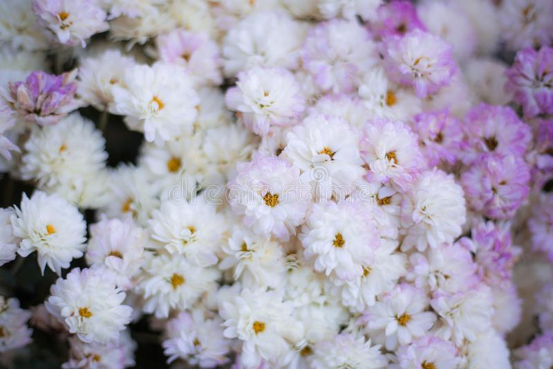 Flowers full color. Abstract background flowers full color stock images