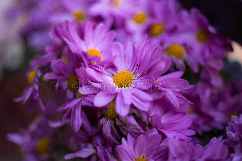 Flowers full color. Abstract background flowers full color stock photos
