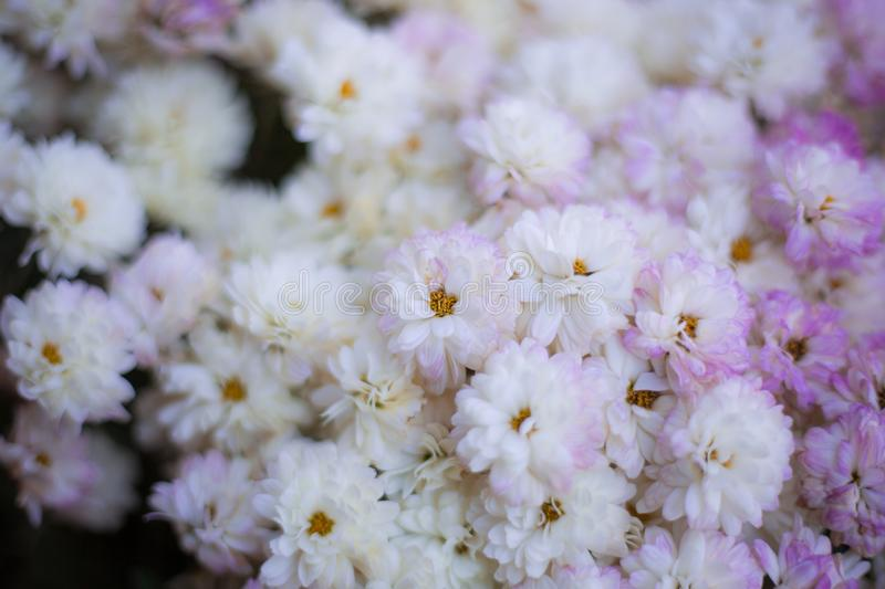Flowers full color. Abstract background flowers full color royalty free stock images