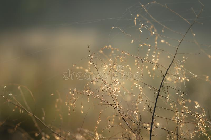 Abstract background of golden sunlight on a wild tree. In the morning royalty free stock photography