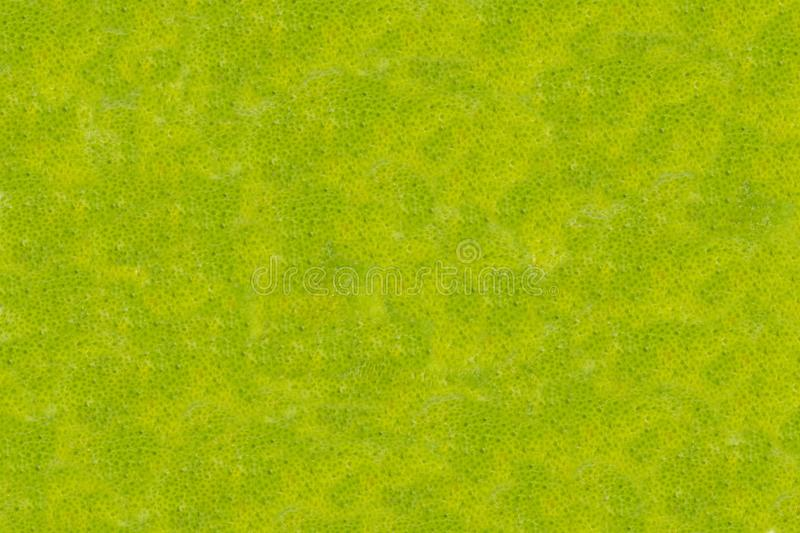 Abstract background green mottled bright foundation of citrus fruit skin base design broom sweeps royalty free stock photography