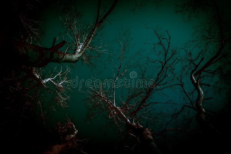 Abstract background in horror style. Bloody surrealistic scary black creepy mystical curved silhouettes of tree branches in the royalty free stock photos