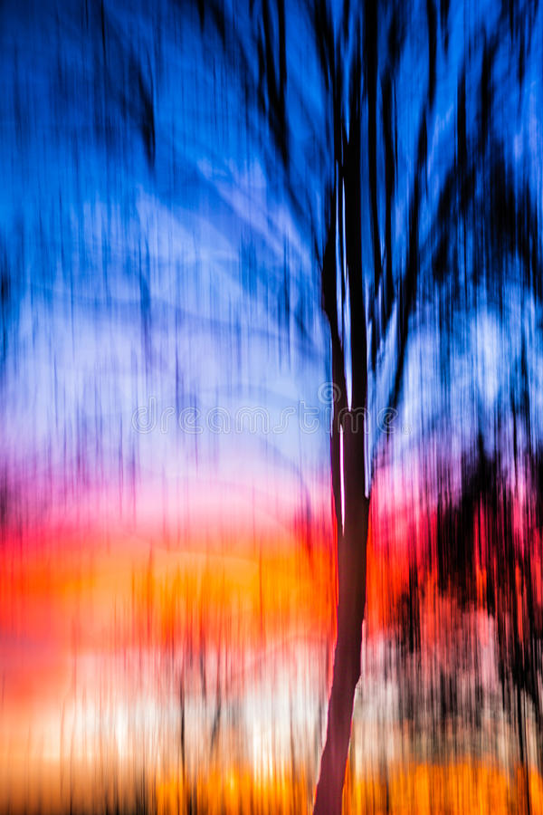 Abstract Background moving tree sunset. This is a tree in my backyard, covered in sunset beams, with blue hour light topping it off royalty free stock images