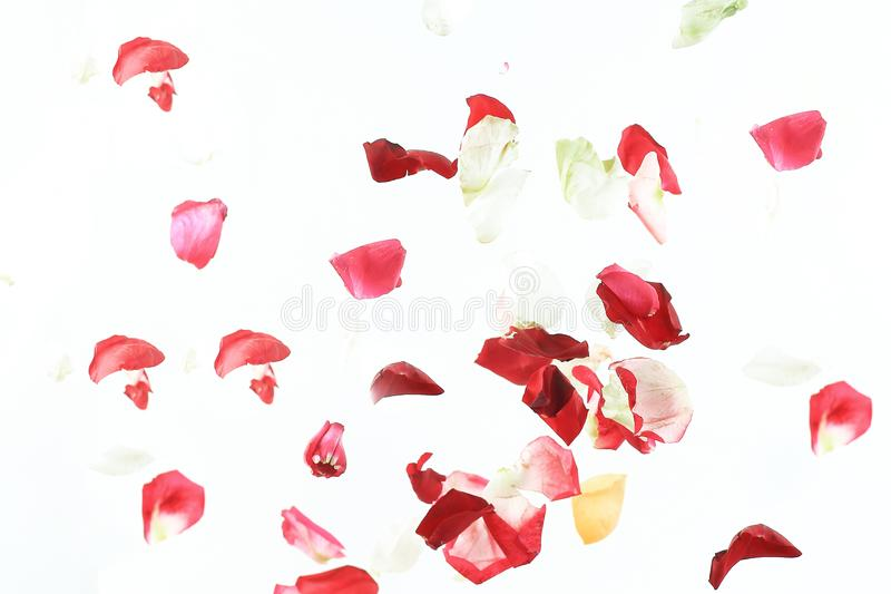 Abstract background of pink petals.photo with place for text stock image