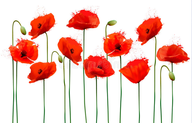 Abstract background with red poppies flowers. stock photos