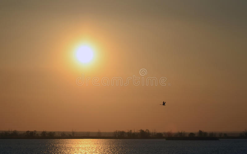 Abstract background red sunset on river bright sun and flying bird in sky stock photography