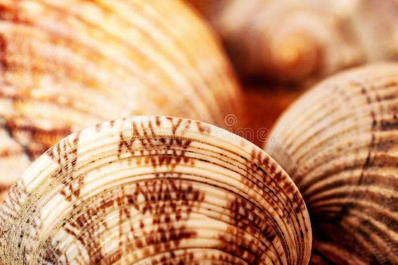 Abstract background from sea shells. royalty free stock photo