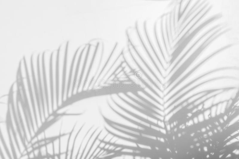 Abstract background of shadow palm leaves on wall. White and Black royalty free stock photos