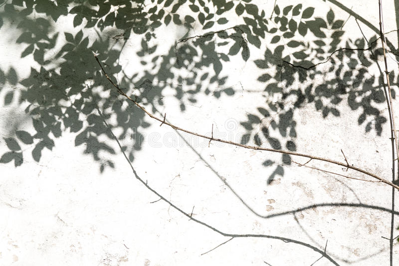 Abstract background of shadows leaf on a white wall. White and Black royalty free stock photos
