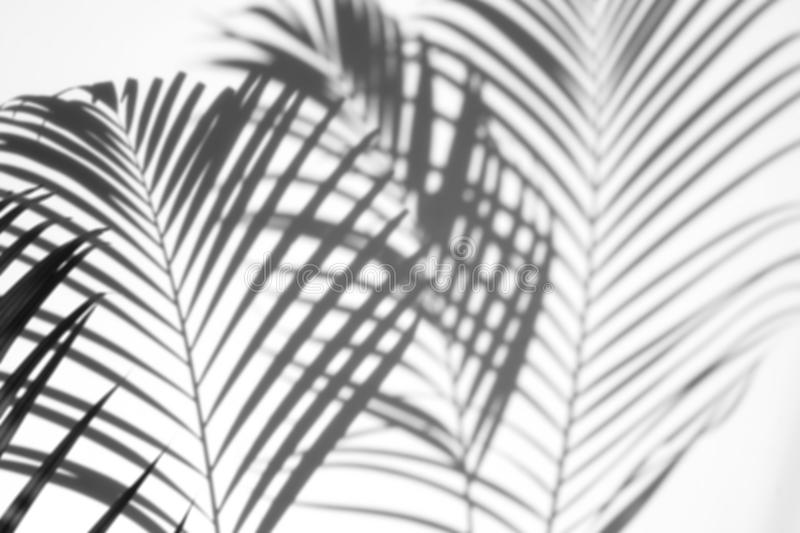 Abstract background of shadows palm leaf on a white wall. White and Black stock photo