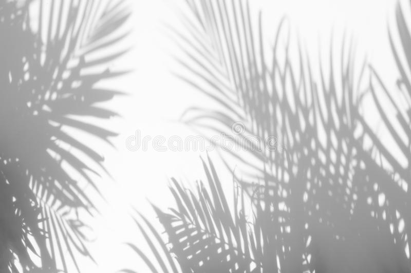 Abstract background of shadows palm leaves on a white wall. White and Black royalty free stock photos