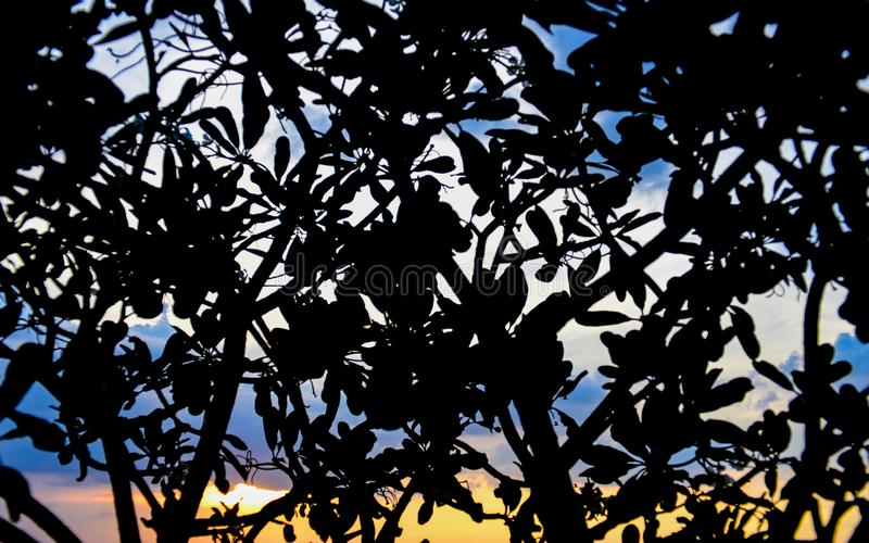 Silhouette of tree with sunset sky background. Abstract background, Silhouette of tree with sunset sky background royalty free stock photos
