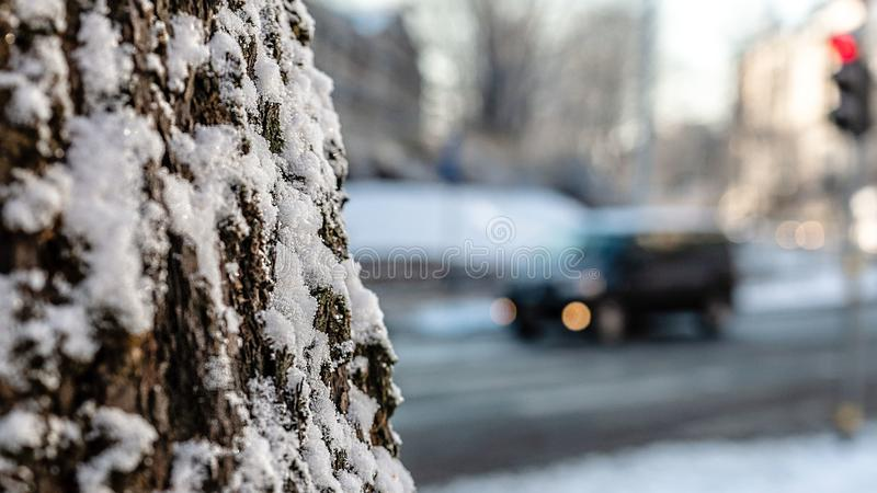 Abstract background with snow-covered trees and urban traffic landscape, soft focus, selective focus - image.  royalty free stock images