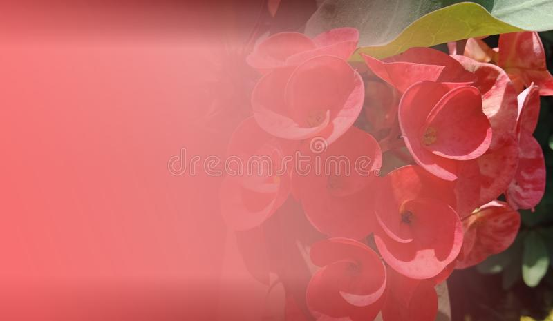 Abstract background template royalty free stock photo