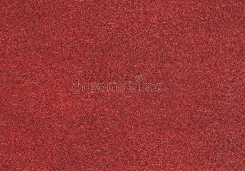 Abstract background texture of genuine red embossed leather. Space for text. Closeup. royalty free stock image