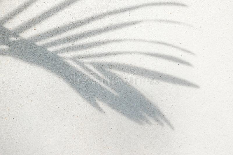 Abstract background texture of shadows palm leaves on a concrete wall stock photos
