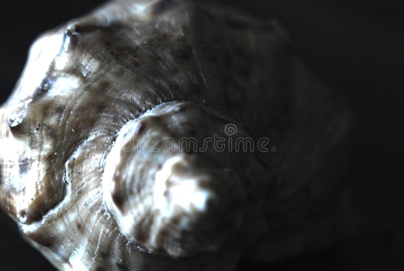 Abstract background, three-dimensional sea shell on a dark royalty free stock photos
