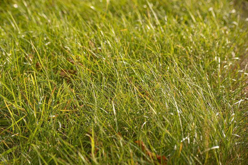 Abstract background with wild real grass. Abstract background with wild real green grass, close, field, nature, plant, outdoor, season, natural, growth, meadow royalty free stock images