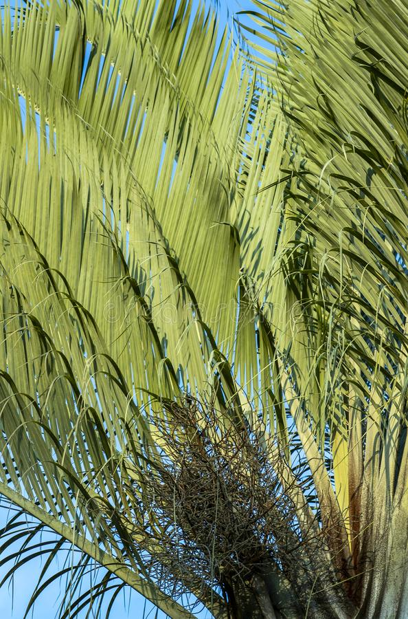 Free Abstract Background With Palm. The Texture Of Green Palm Leaf. Shapes In Nature. Stock Photos - 145573893