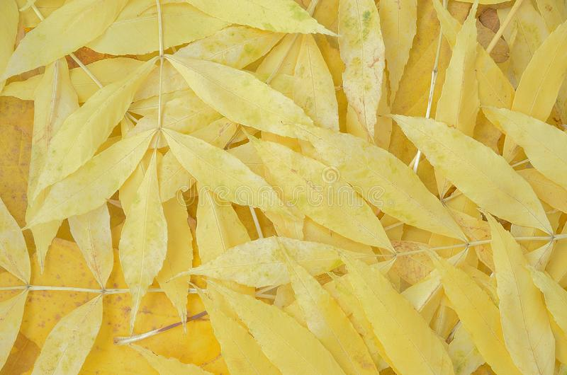 Abstract background of yellow autumn leaves stock photos